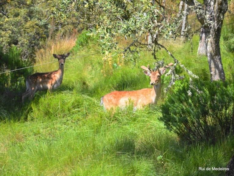 Mafra Hunting Reserve